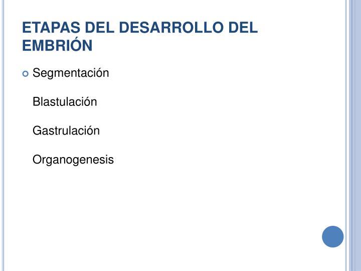 ETAPAS DEL DESARROLLO DEL EMBRIÓN