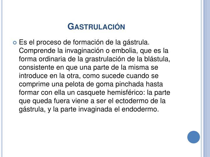 Gastrulación