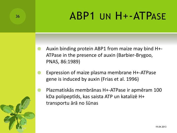 ABP1 un H+-