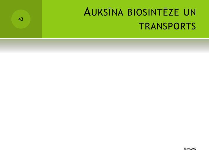 Auksīna biosintēze un transports
