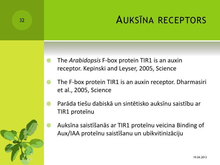 Auksīna receptors