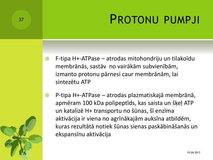 Protonu pumpji