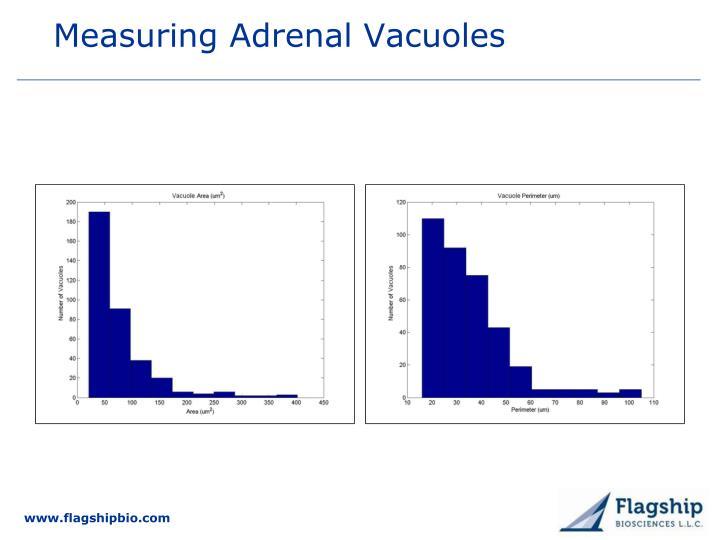 Measuring Adrenal Vacuoles