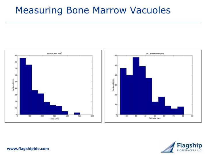 Measuring Bone Marrow Vacuoles
