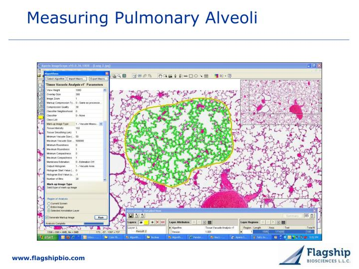Measuring Pulmonary Alveoli