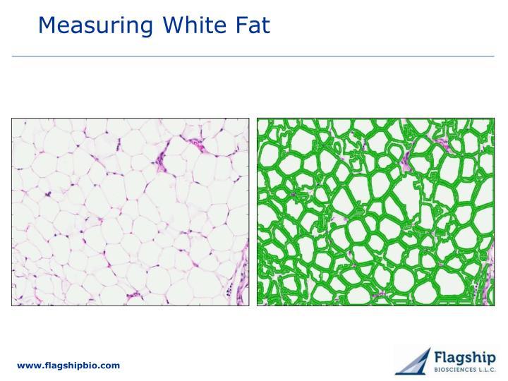 Measuring White Fat