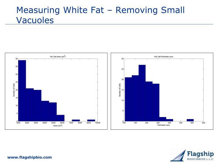 Measuring White Fat – Removing Small Vacuoles