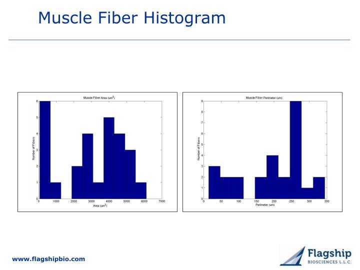 Muscle Fiber Histogram