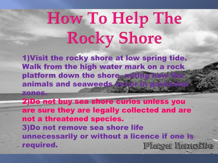 How To Help The Rocky Shore