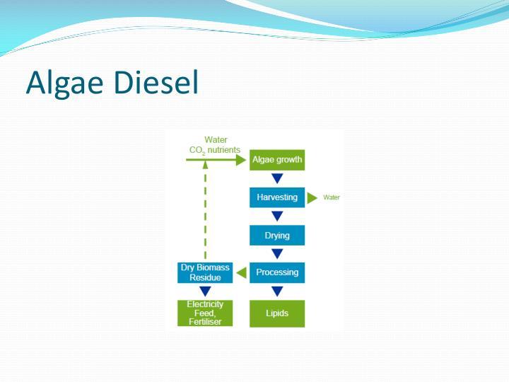Algae Diesel