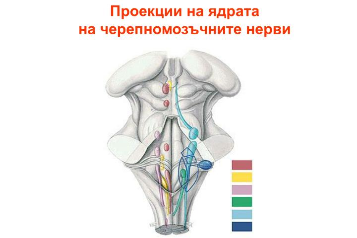 Проекции на ядрата