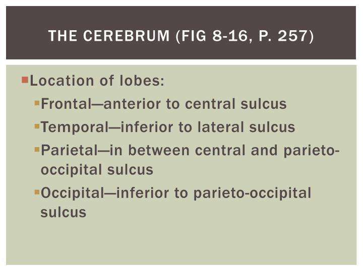 The cerebrum (Fig 8-16, p. 257)