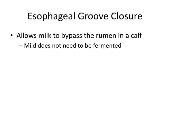 Esophageal Groove Closure