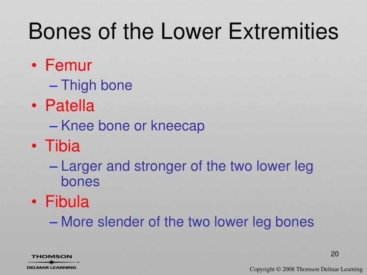 Bones of the Lower Extremities