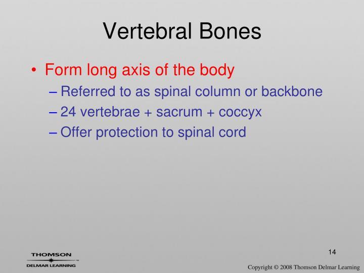 Vertebral Bones