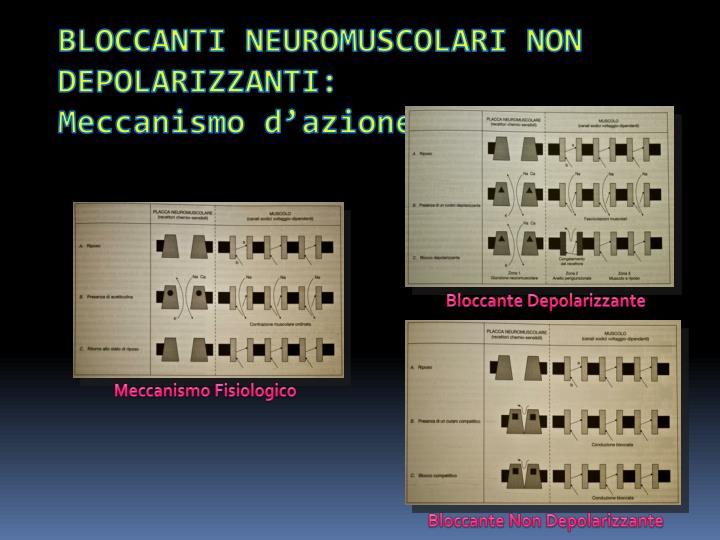 BLOCCANTI NEUROMUSCOLARI NON DEPOLARIZZANTI: