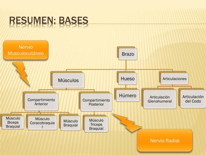 Resumen: bases