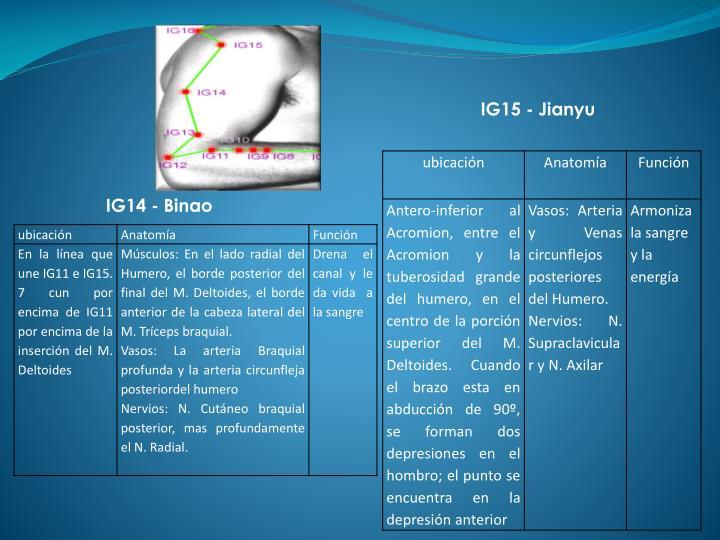 IG15 -