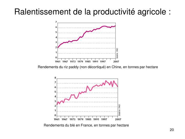 Ralentissement de la productivité agricole :