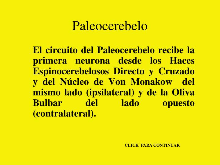 Paleocerebelo