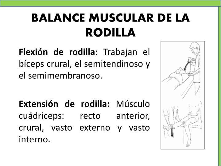 BALANCE MUSCULAR DE LA RODILLA