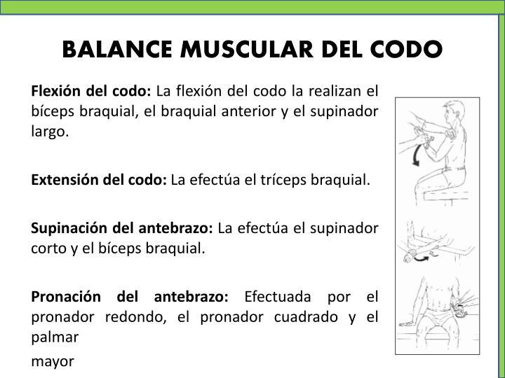 BALANCE MUSCULAR DEL CODO