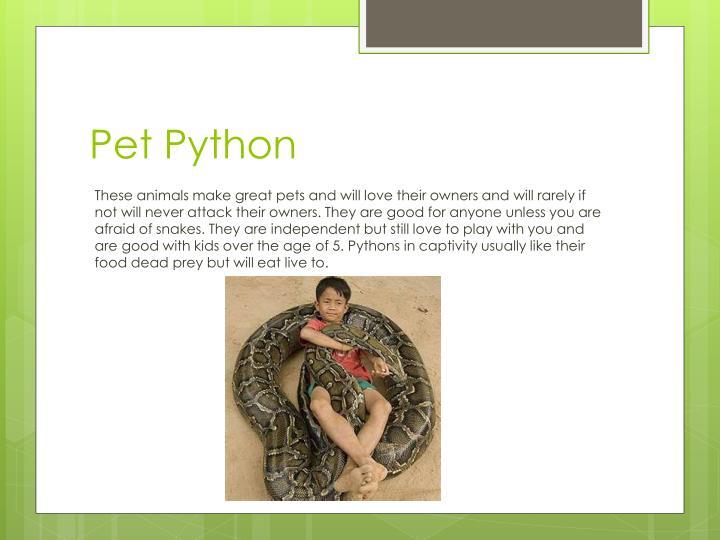 Pet Python