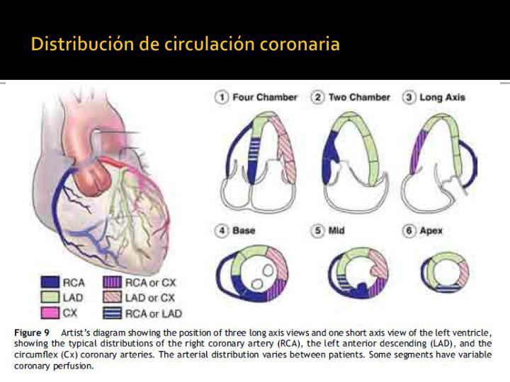 Distribución de circulación coronaria