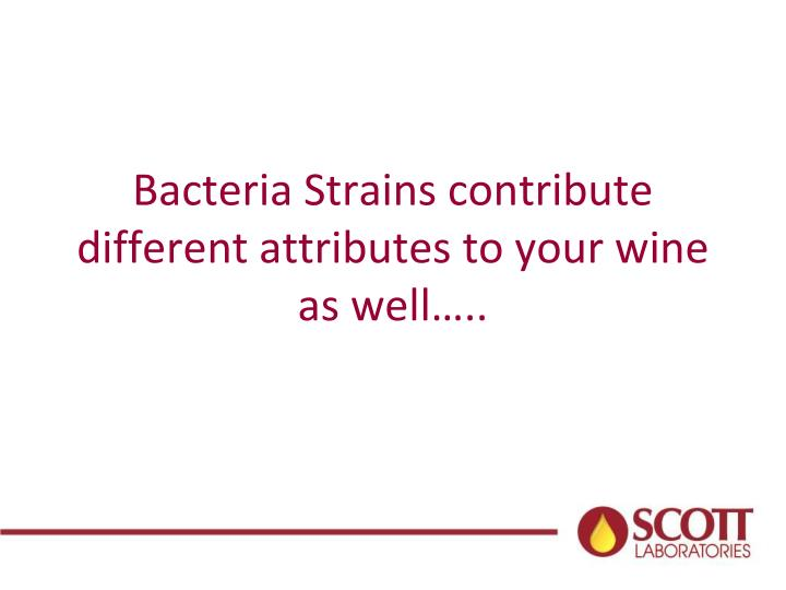 Bacteria Strains contribute different attributes to your wine as well…..