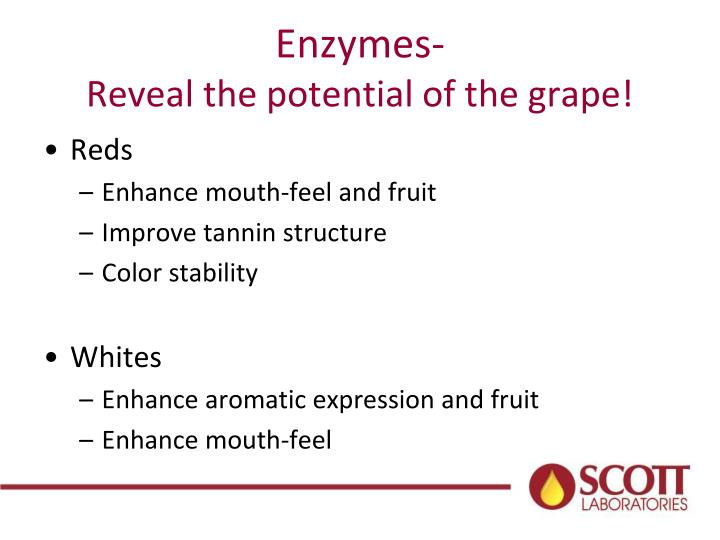 Enzymes-