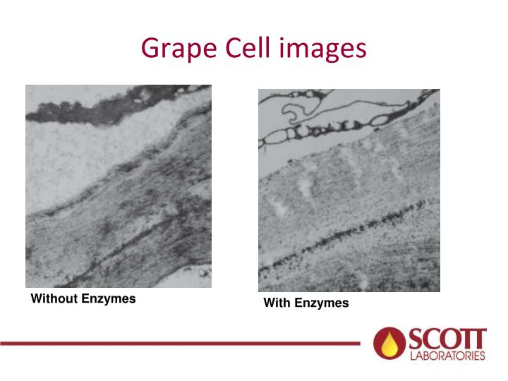 Grape Cell images