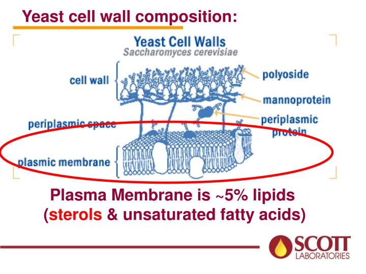 Yeast cell wall composition: