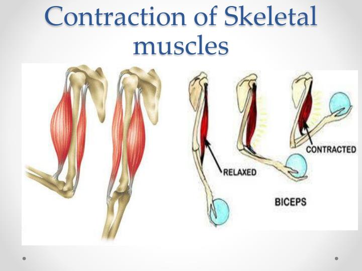 Contraction of Skeletal muscles