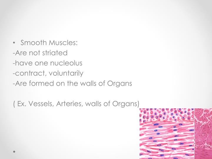 Smooth Muscles: