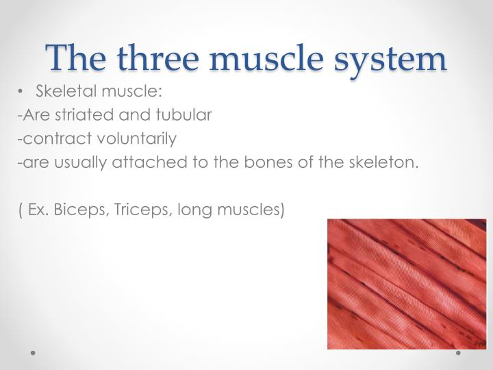 The three muscle system