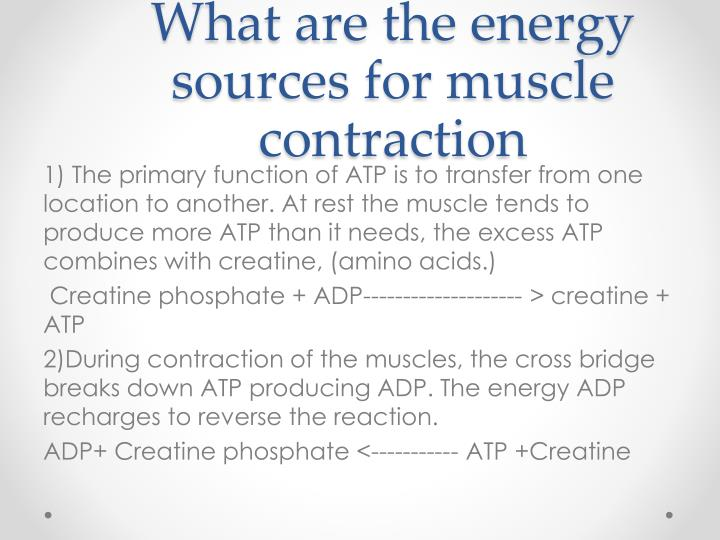 What are the energy sources for muscle contraction