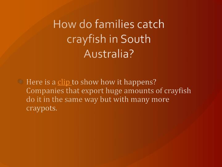 How do families catch crayfish in South Australia?