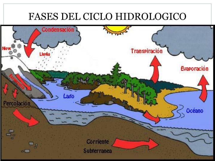 FASES DEL CICLO HIDROLOGICO