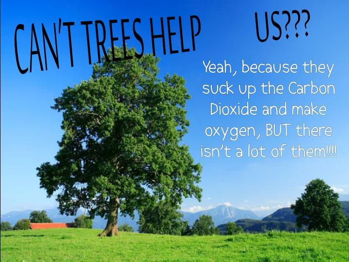 Can't trees help          us???