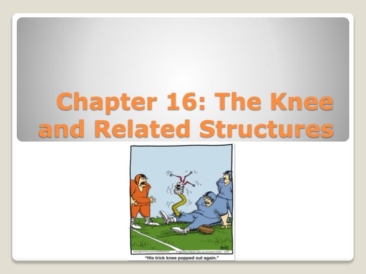 Chapter 16 the knee and related structures