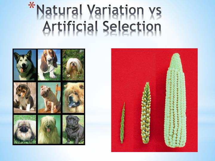 Natural variation vs artificial selection