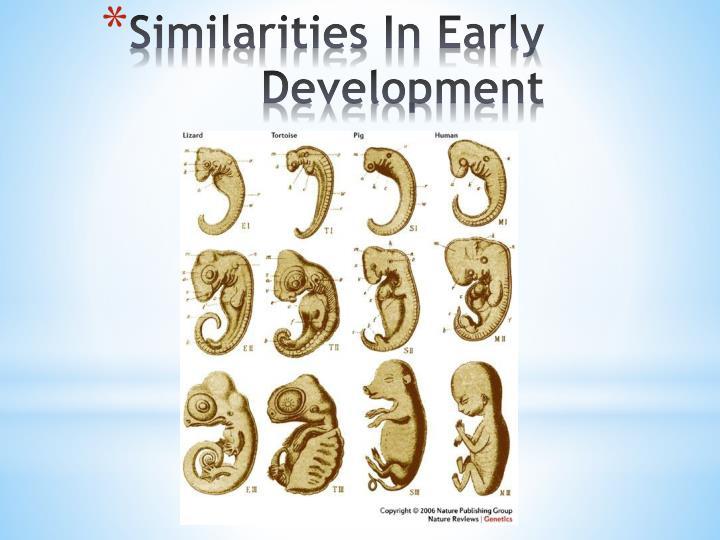 Similarities In Early Development