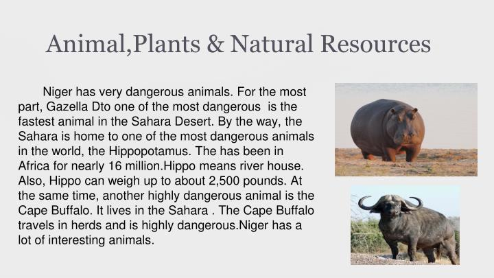 Animal,Plants & Natural Resources