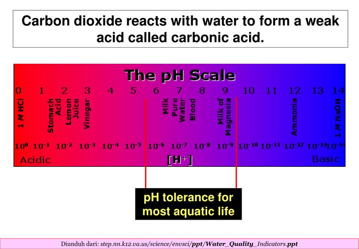 Carbon dioxide reacts with water to form a weak acid called carbonic acid.
