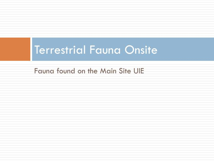 Terrestrial Fauna Onsite