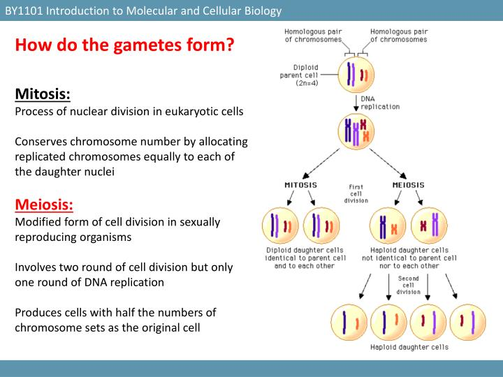 BY1101 Introduction to Molecular and Cellular Biology