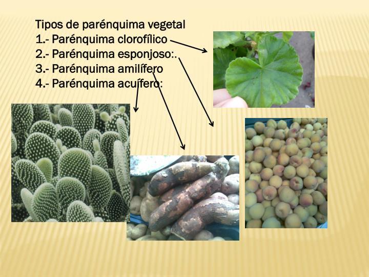 Tipos de parénquima vegetal