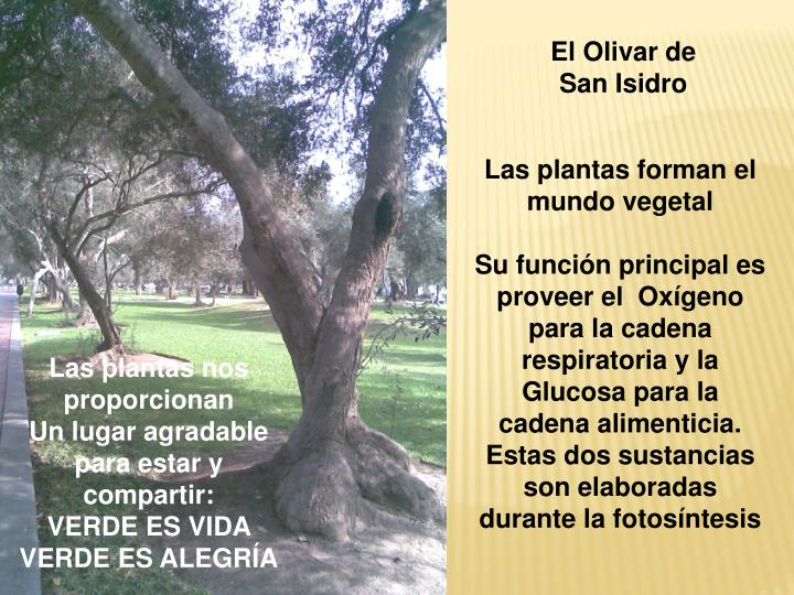 El Olivar de San Isidro