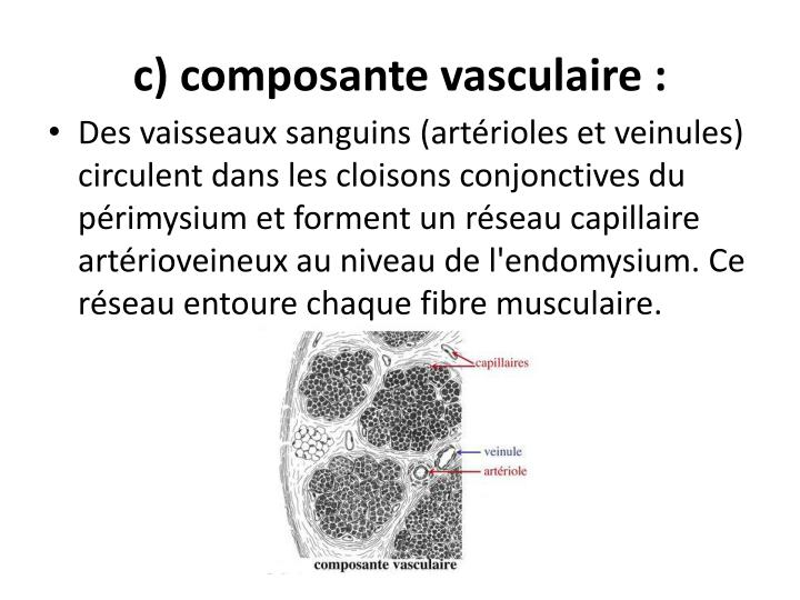 c) composante vasculaire: