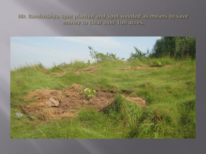 Mr. Bandutshya spot planted and spot weeded as means to save money to clear over 100 acres.